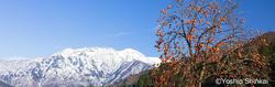 八海山.jpg