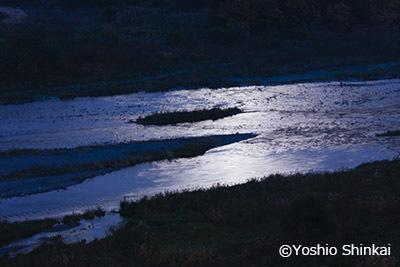 月光の多摩川.jpg