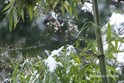 竹と雪.jpg