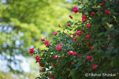 花-4.jpg