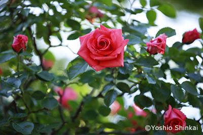 花-5.jpg