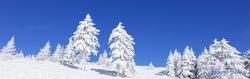 霧氷12月用.jpg