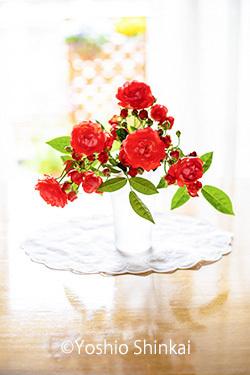 バラ 3.jpg