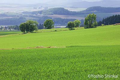 丘の風景.jpg