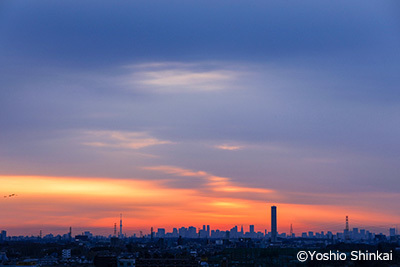 新宿高層ビル群.jpg