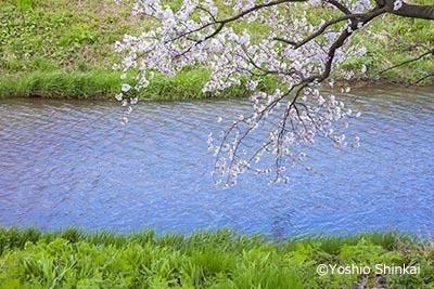 春の小川-1.jpg