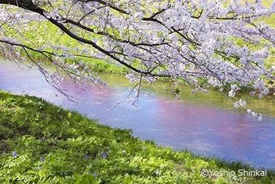 春の小川-2.jpg