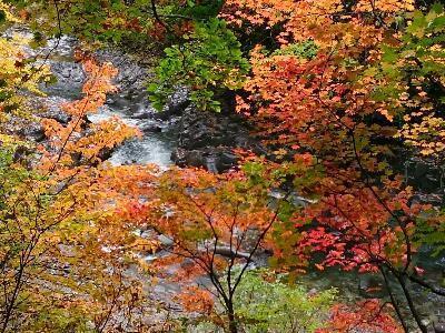 紅葉と渓谷.jpg