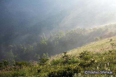 霧の草原.jpg