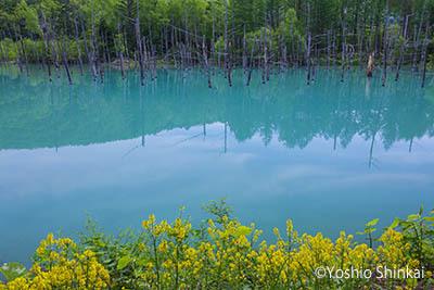 青い池1.jpg