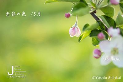 shin-01.jpg